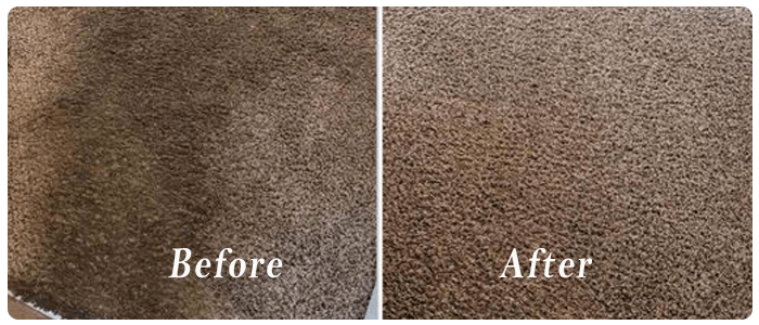 End of Lease Carpet Cleaning Double Bay